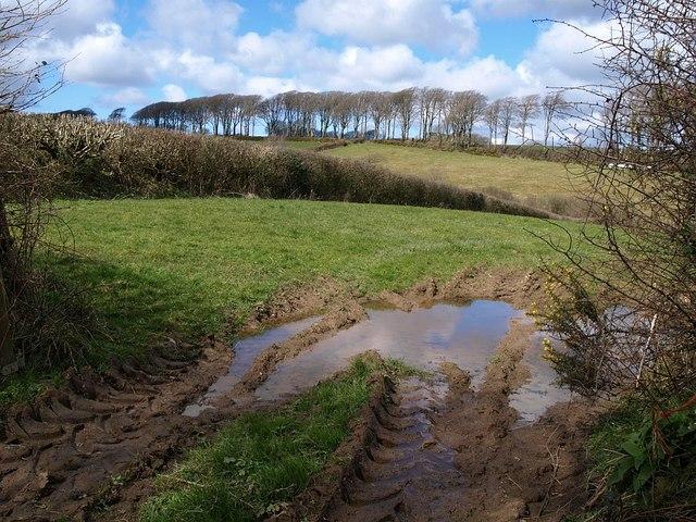 Field near Bradworthy