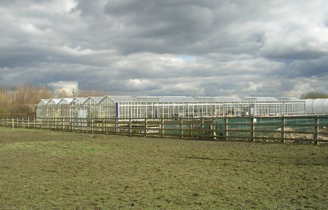 Glasshouses - Woodend Nurseries - Preston Lane