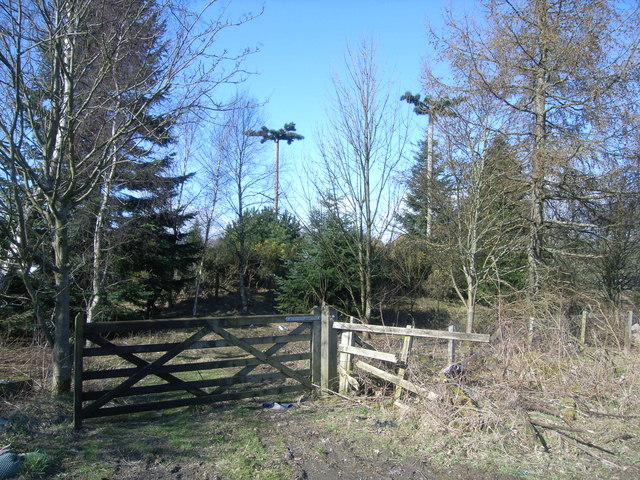 Woodland, gates and mobile mast