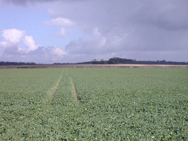 Wheel tracks in a rape field