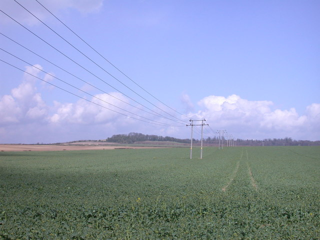 Power lines across a rape field