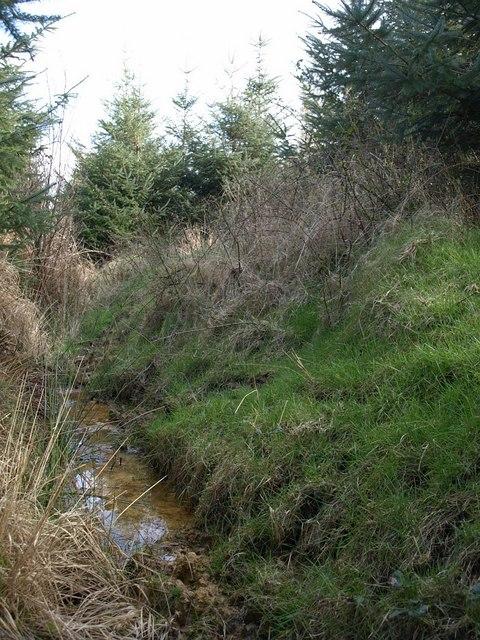 Ditch in woodland near Huddisford
