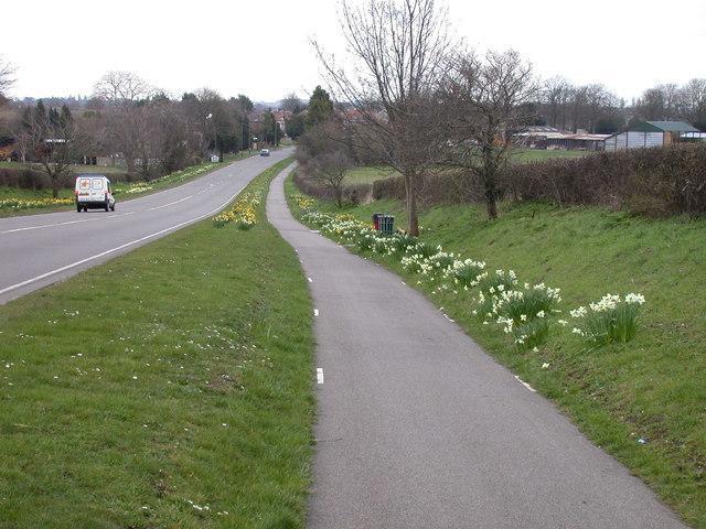 Daffodilly cyclepath
