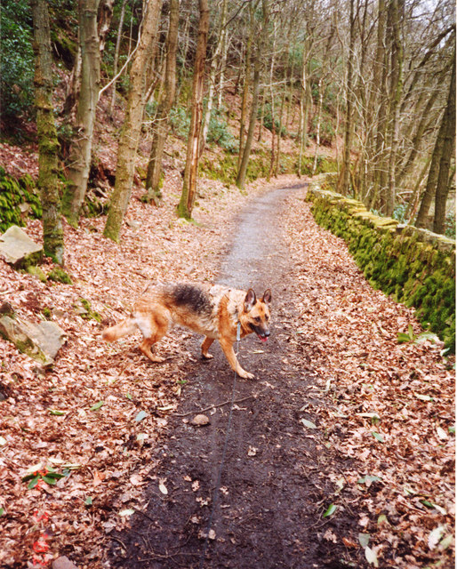 Path by South arm of Grizedale Reservoir