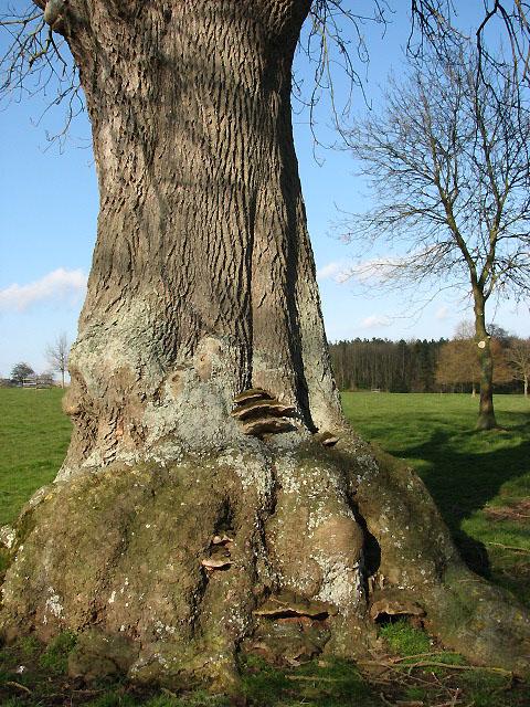 Tree generations