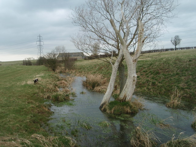 Willow Tree in the Brook