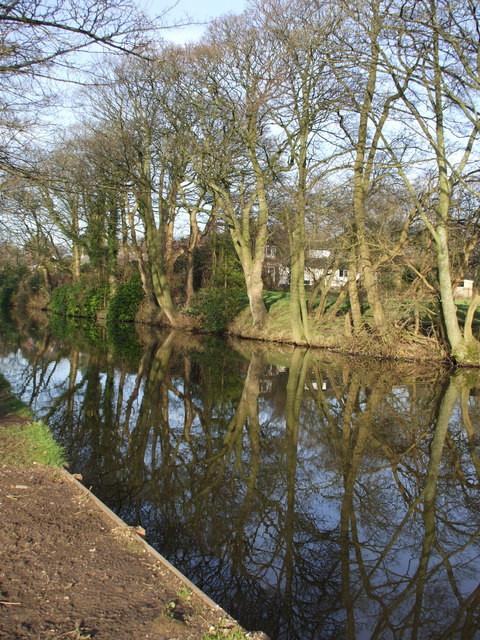 Reflection of trees along Lancaster canal