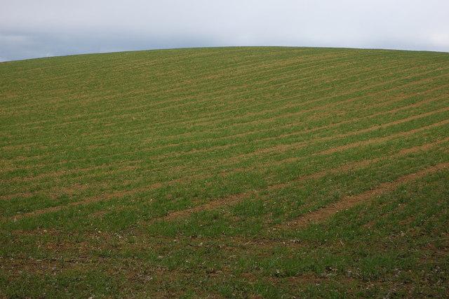 Field of winter cereal, Great Comberton