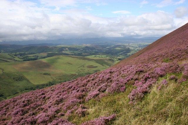 Heathery slopes