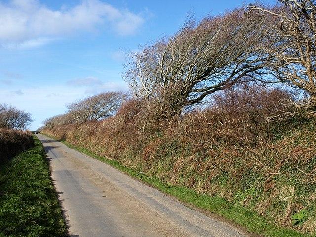 Windblasted trees near Harris Cross