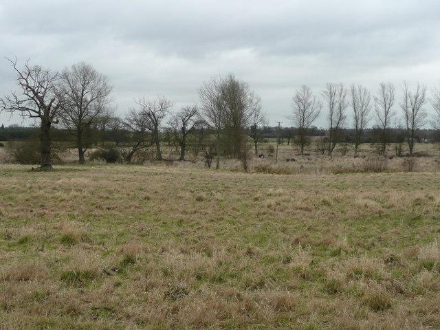 Rough ground alongside the Little Ouse