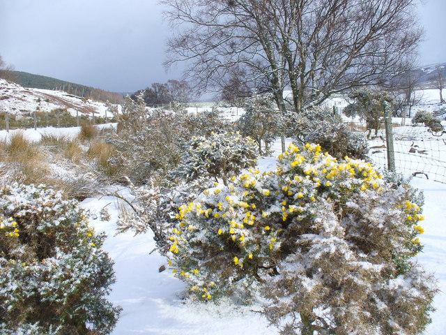 Landscape by Ballochan