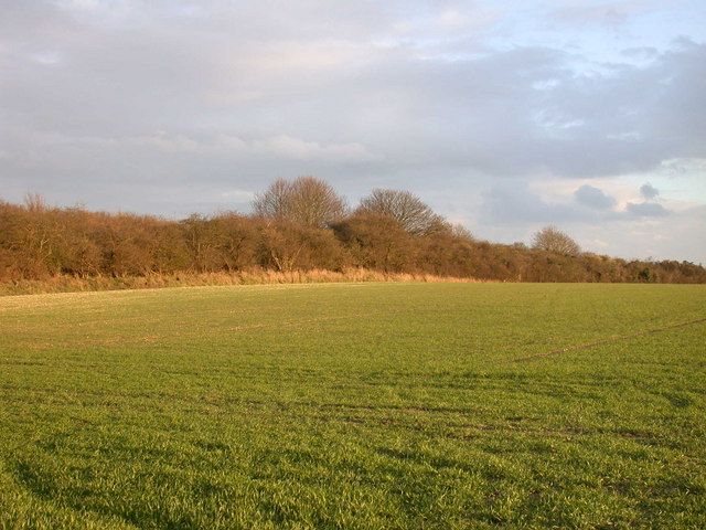 Fields and woods south of Wort's Causeway