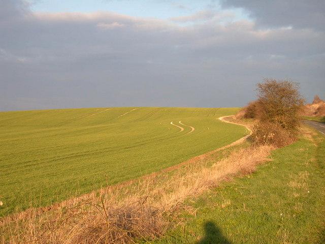 Wheatfield north of Wort's Causeway
