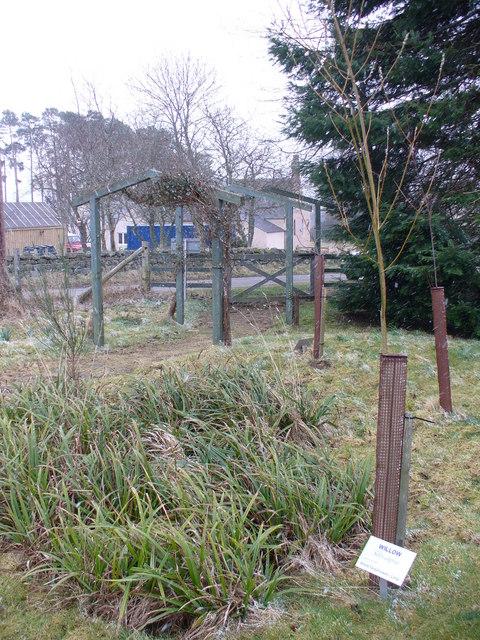 Finzean School Wood
