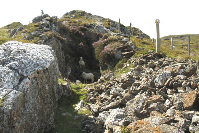 Sheep sheltering in the topmost working