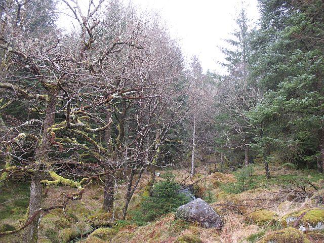 Older woods