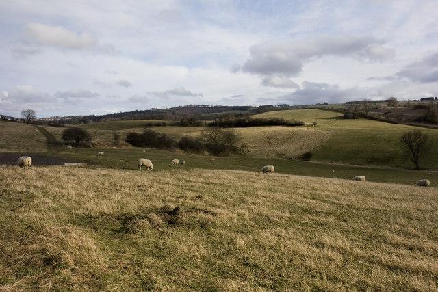 Wylam Wood Farm