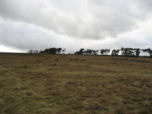 Moorland near Slade House