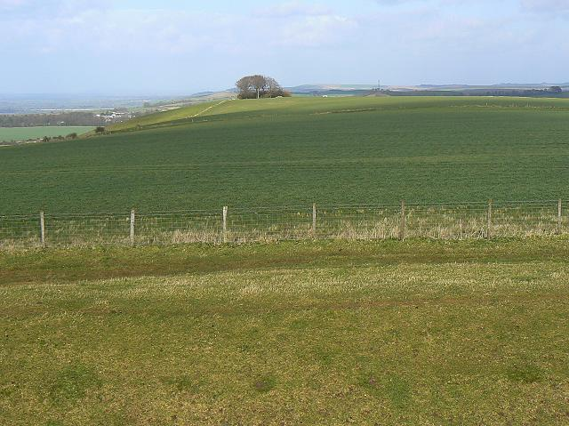 Liddington clump from Liddington Castle