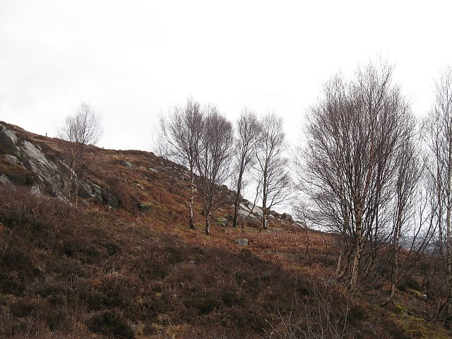 Birch woods, Bracorina