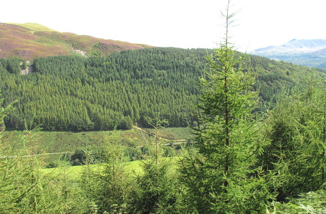 View across the Mawddach Valley to the Dolfawr Forest block