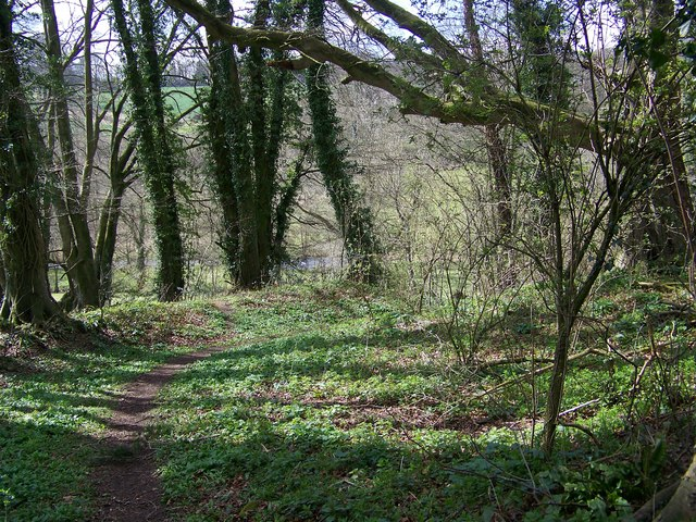 Path, Quarry Wood