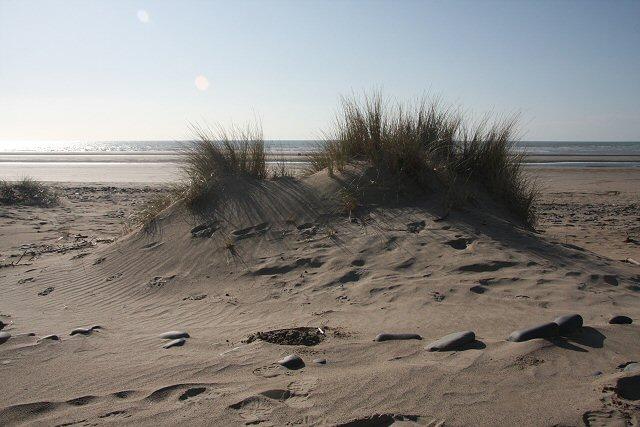 Emerging sand dune at Borth