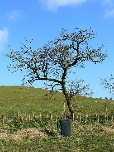 Tree and wheelie bin near Folly Farm, Liddington
