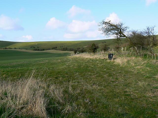Field margin near Folly Farm, Liddington