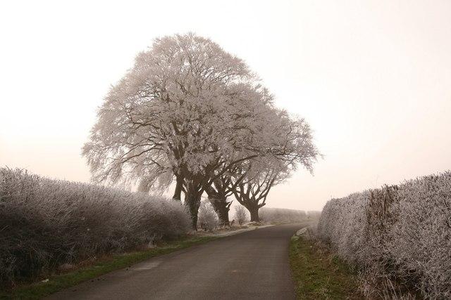 Three frosty trees