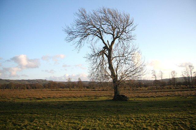 Tree on the flood plain