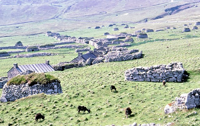 Soay sheep by the deserted village