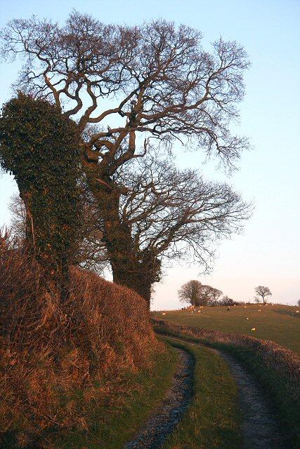Bridleway to Tal-sarn