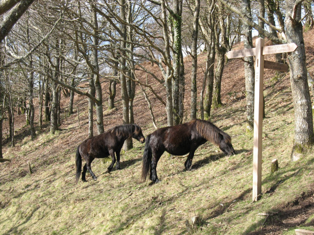 Ponies on Piddledown Common