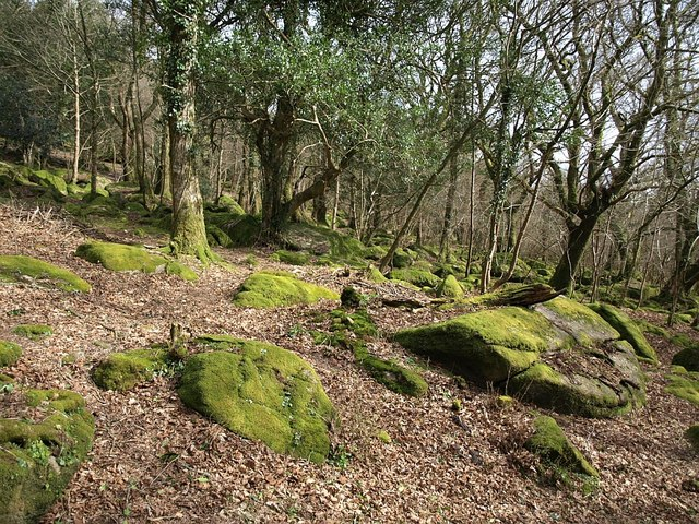 Woodland, Lustleigh Cleave