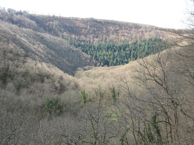 Hannicombe Wood