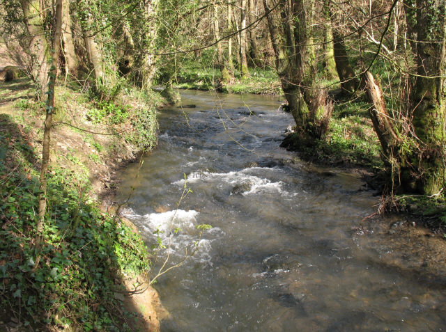 Tributary of the Teign