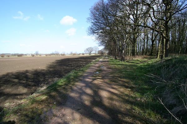 Track alongside woodland