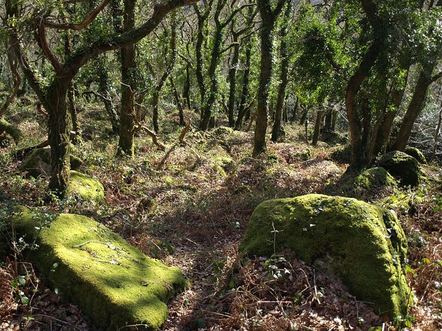 On Lustleigh Cleave