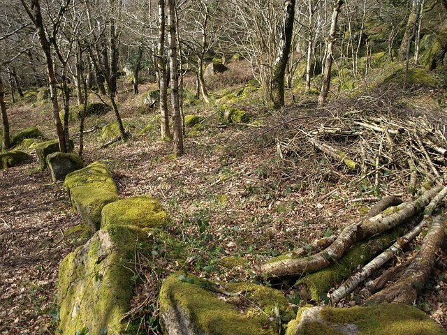 Woodland on Lustleigh Cleave