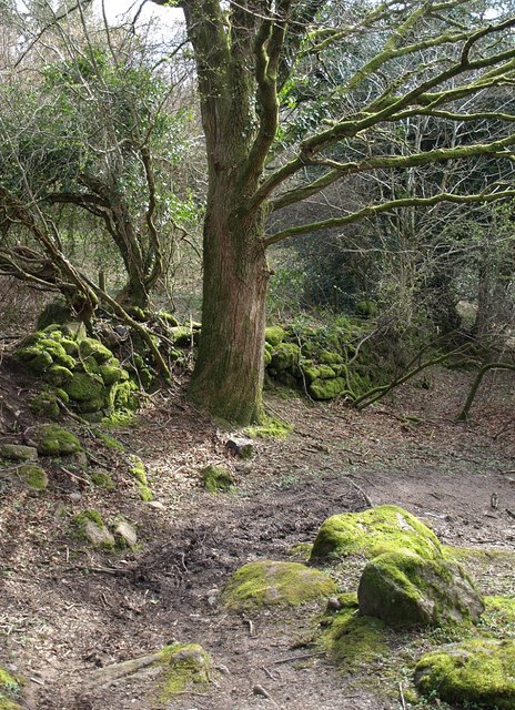 Bridleway, wall and tree, Lustleigh Cleave