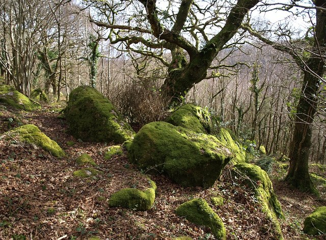 Mossy boulders, Lustleigh Cleave