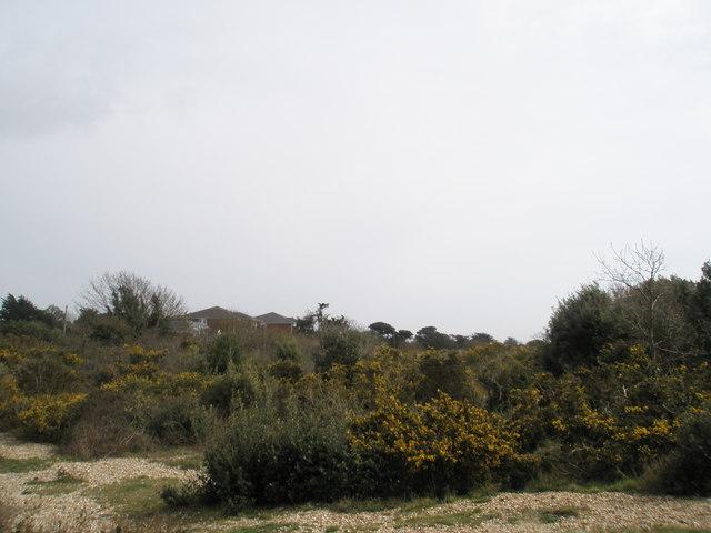 Sinah Common