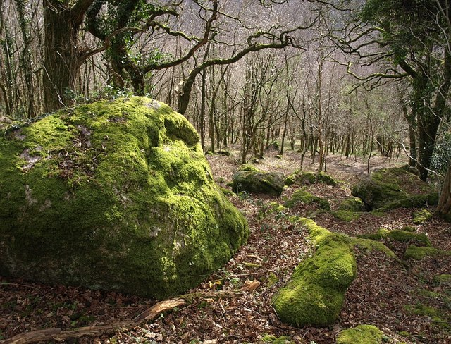Mossy boulder, Lustleigh Cleave