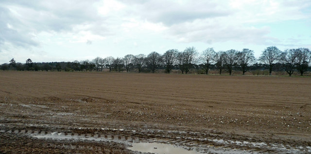 Arable land in the Suffolk Heath