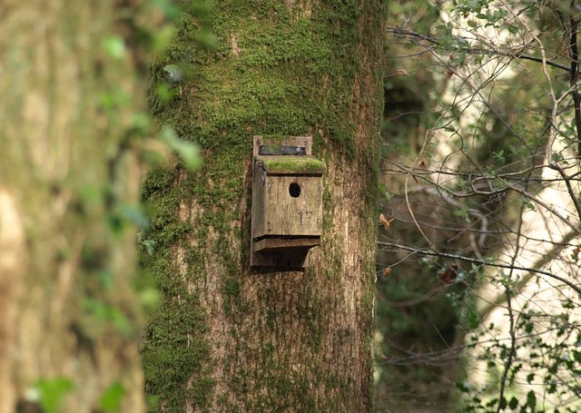 Nesting box, Woodash