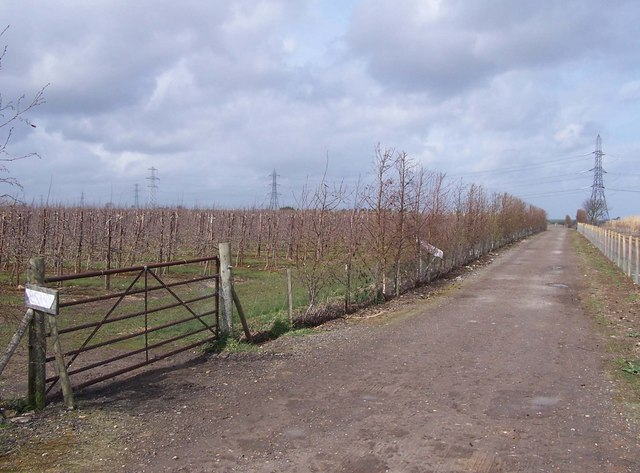 Farm track through new orchards