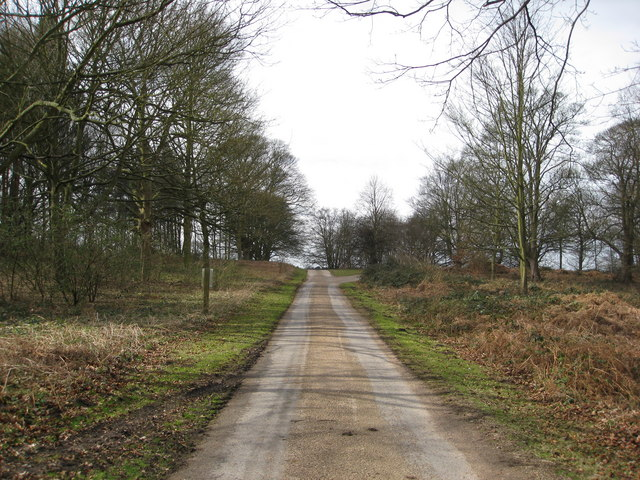 Thoresby Park Estate - Track to Perlethorpe on the right