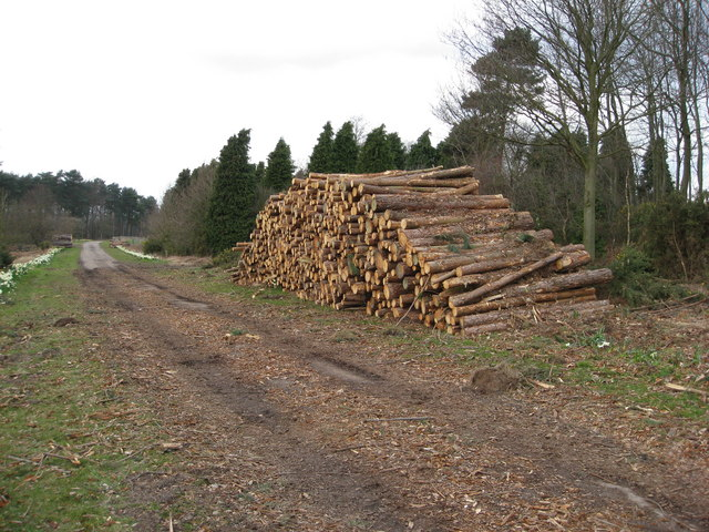 Thoresby Park Estate - Forestry Work